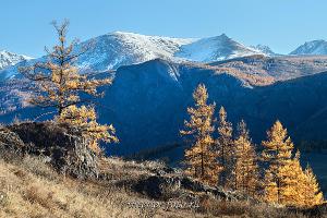 Вершины Курайского хребта Алтай