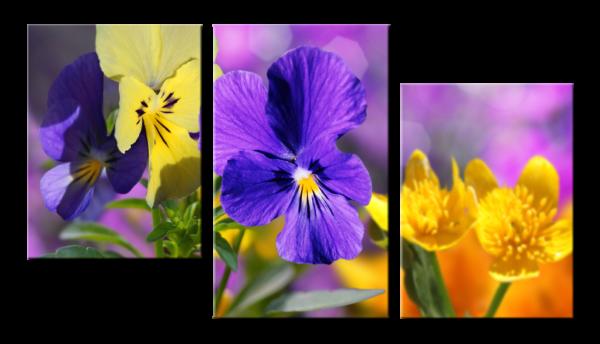 Модульная фотокартина Цветы