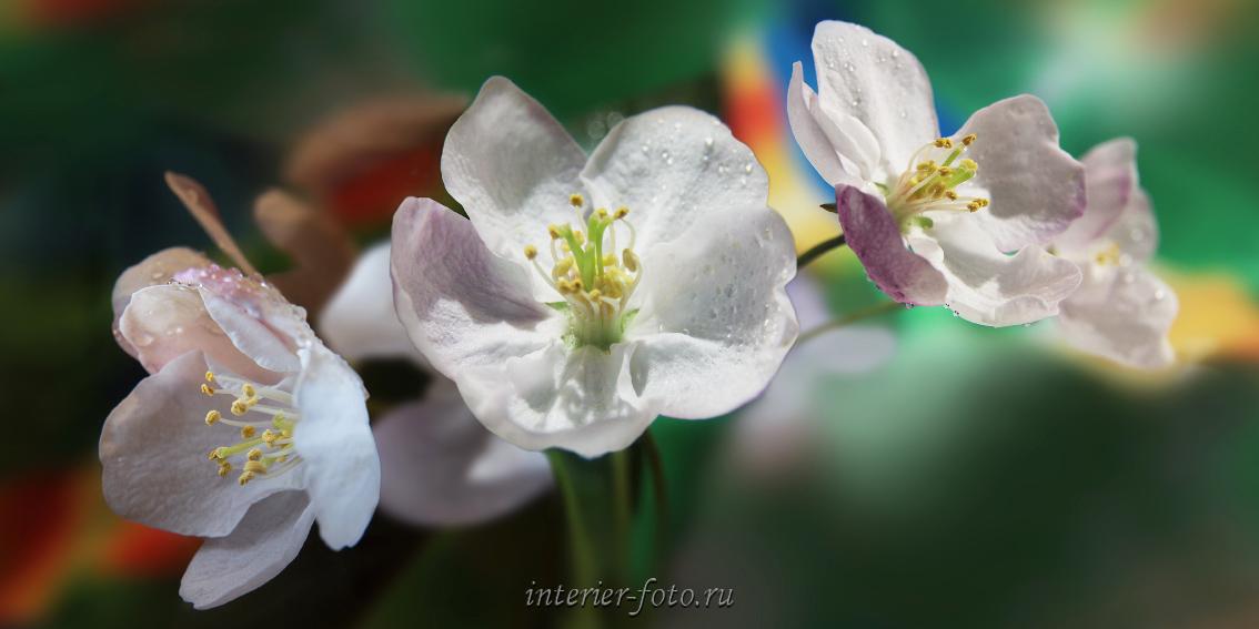 Панорамная фотография Цветы Алтая