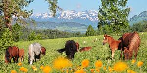 Панорама Алтай