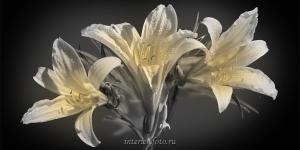 Фото цветов Дикие лилии