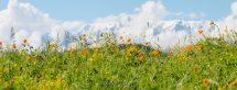 Пейзаж с цветами Алтай
