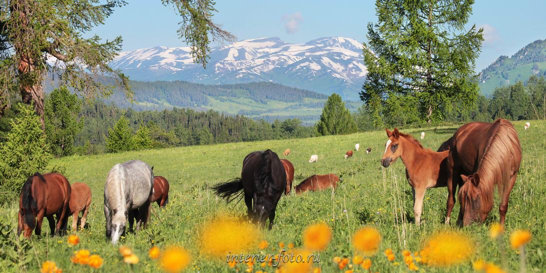 Смотреть фото природы Алтай