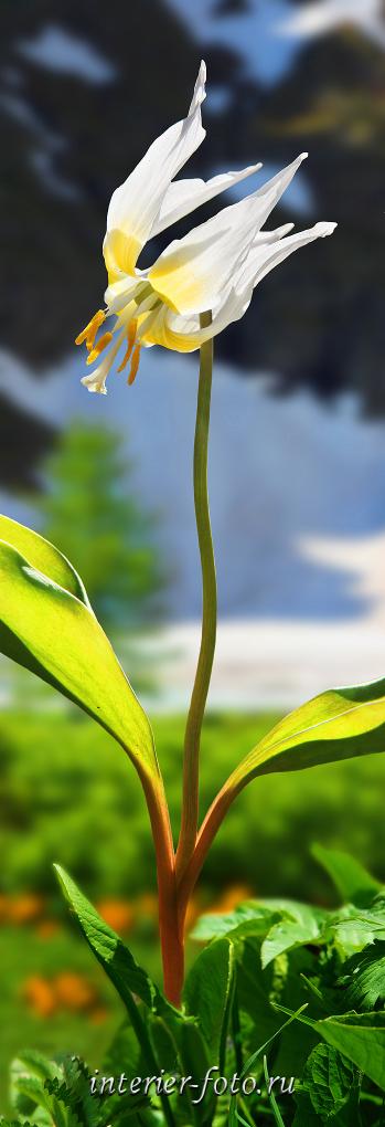 Вертикальное фото Цветы и снег