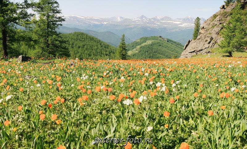 Весенний пейзаж Цветущие горы