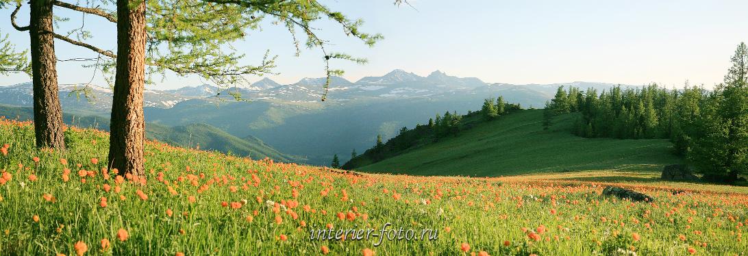 Живописный вид Весенее цветение