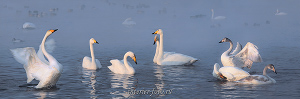 Панорама Лебеди озера Светлого. Алтай (6425)