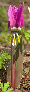 Вертикальная композиция Цветы
