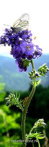 Вертикальная композиция Цветы Алтая