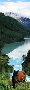 На Кучерлинском озере. Алтай (7028)