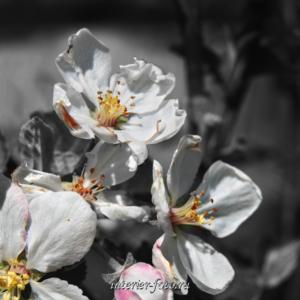 Черно-белые цветы для диптиха