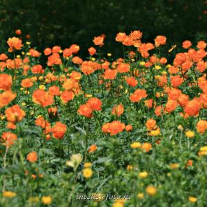 Поляна цветов