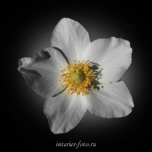 Черно-белые цветы для триптиха