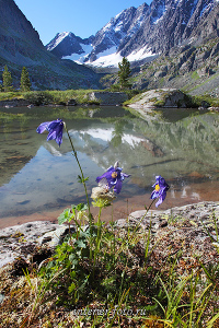Летние пейзажи Цветы озера Куйгук