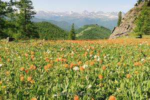 Красивые горы Парк Уч-Энмек