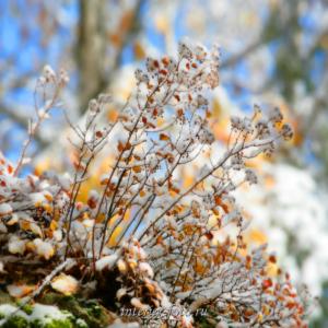 Фотокартины купить Осень на Алтае