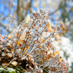 Осень на Алтае