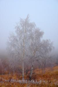 Родной пейзаж Туман