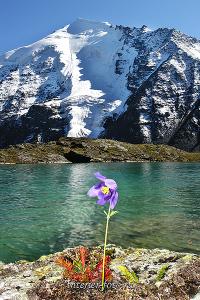 Живописные места Долина семи озер на Алтае