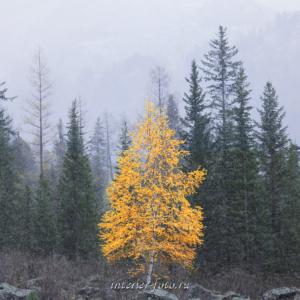 Осень на Катунском хребте