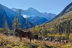Пейзаж на стене Лошади в Кучерлинской долине