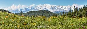 Весна в горах. Вид на Северо-Чуйский хребет. Алтай (6384)