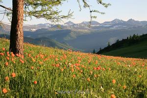 Природный пейзаж Уч-Энмек - Теректинский хребет