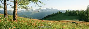 Весна на Теректинском хребте Цветущий Алтай