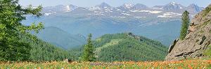 Весна на склонах горы Ак-Кем. Теректинский хребет. Алтай (6128)