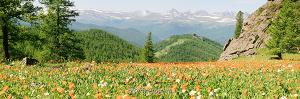 Панорамное фото Алтай - парк Уч-Энмек