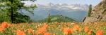 Панорамное фото Теректинский хребет, Алтай