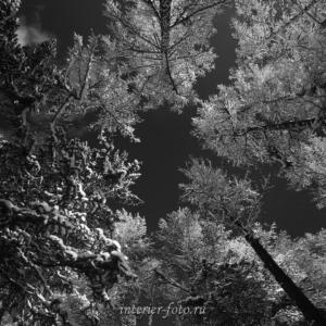 чб фотокартины Зимний лес