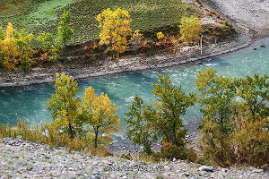 Осенняя Чуя в Чуй-Оозы
