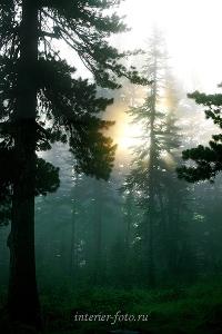 Виды пейзажа Туманное утро в Ергаках