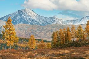 Вершины Курайского хребта с Улаганского плато