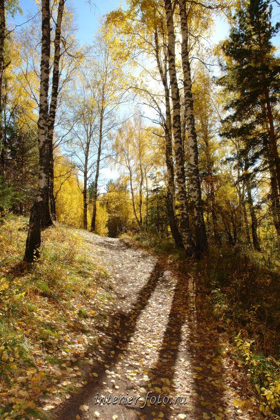 Осень фото вертикальное