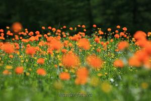 Фото для ваших стен Весна