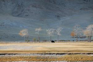 В районе Цэнгэла - Монголия