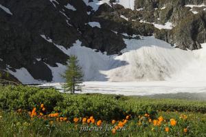 Цветы и снег - Верхние озера
