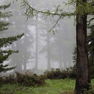 Туман в горах - Красная
