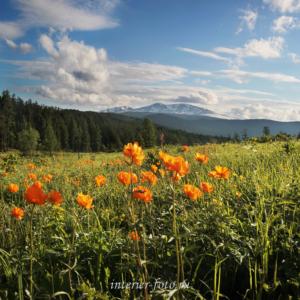 Цветущие луга - Кайтанакский перевал