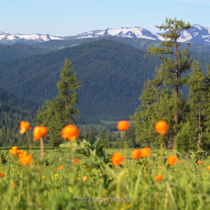 Весенние виды в районе Кайтанакского перевала