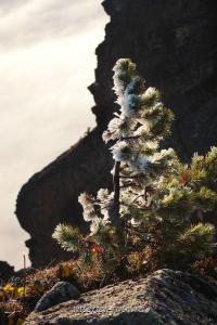 Стойкий кедр высокогорья - Кузнецкий Алатау