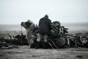 Кочевники Монголии