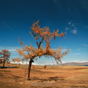 Пейзажи Монгольского Алтая - осень