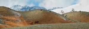 В горах Монгольского Алтая