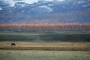 Таежные склоны Монгольского Алтая - Хурган