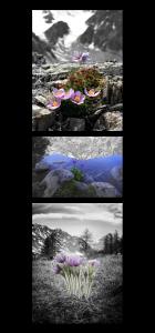 Вертикальная композиция - 3 фотографии на стене