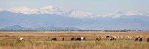 Горы Западной Тувы