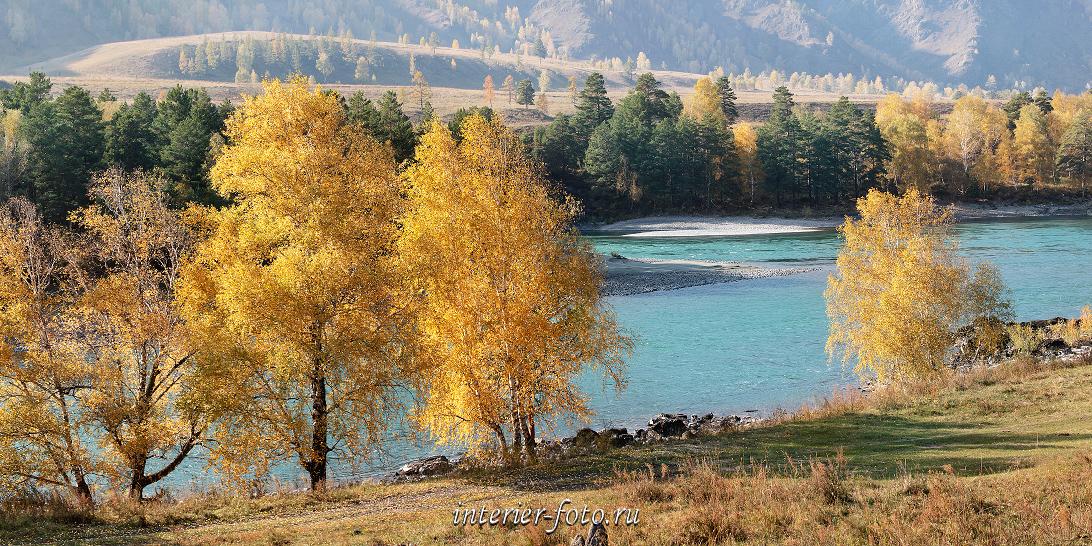 Панорама Осенняя Катунь
